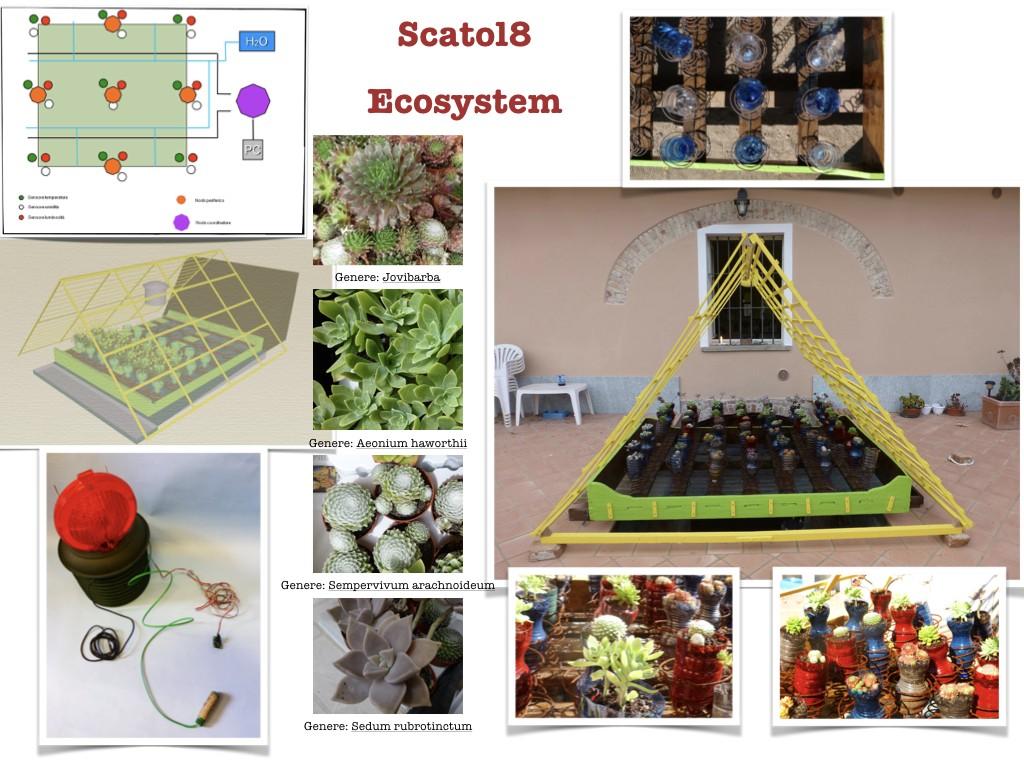 GRASS8_ECOSYSTEM.001
